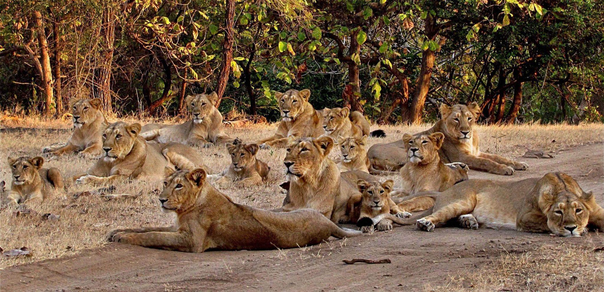 Gir Wildlife Sanctuary