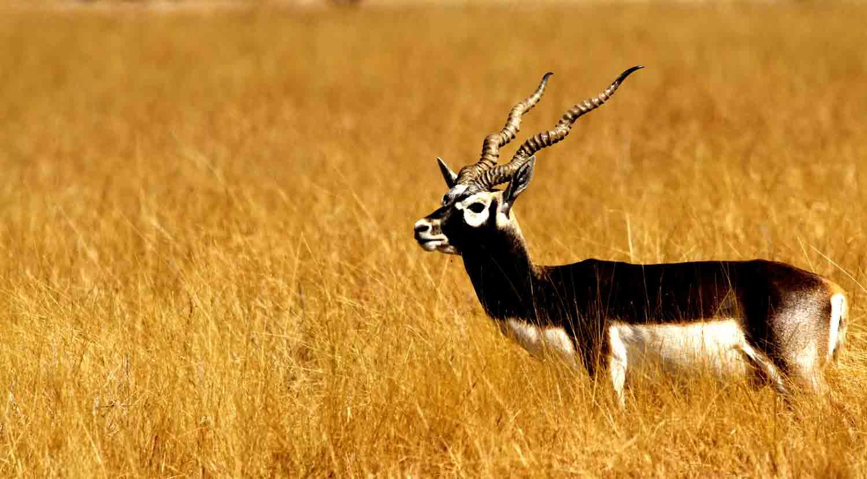 Top 10 Wildlife Sanctuaries of India