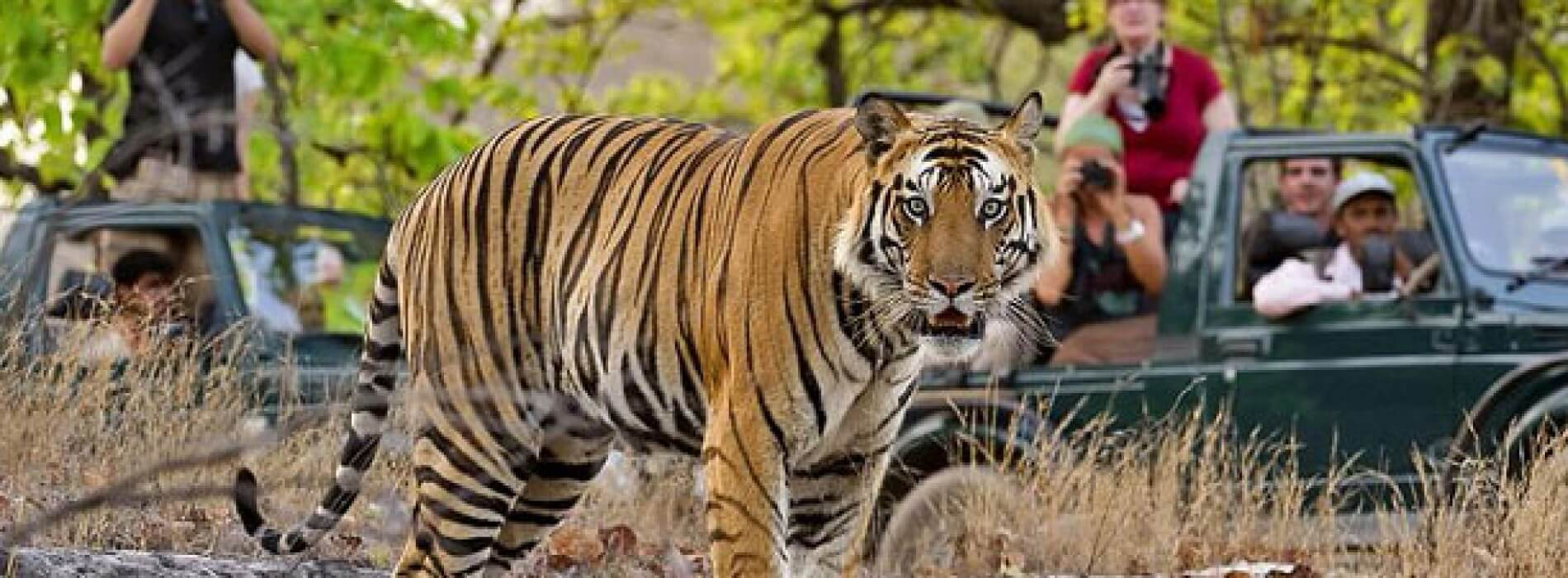 http://comedymood.com/top-10-wildlife-sanctuaries-of-india