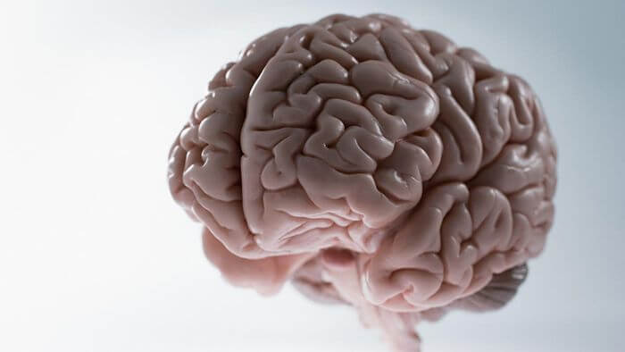 the weight of human brain?