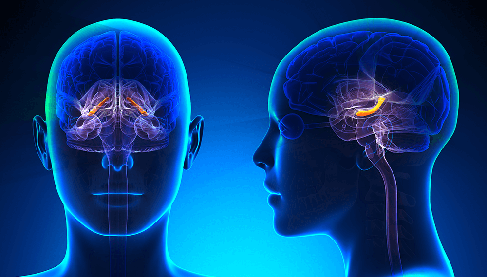 Hippocampus and memory are linked