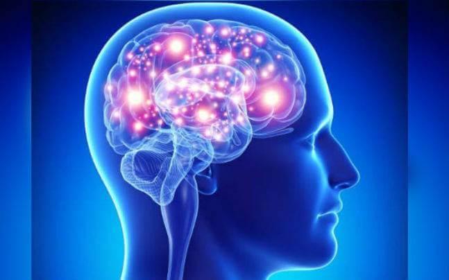 Human brain facts on memory